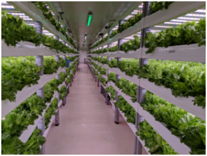 Controlled-Environment Agriculture